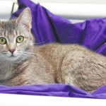Shelter to host adopt a pet day