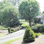 August Yard of the Month awarded