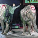 Elephants take the stage one last time