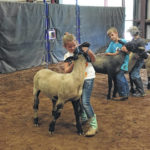 Youth livestock clinic held