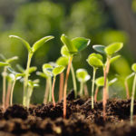 SCC offers gardening classes