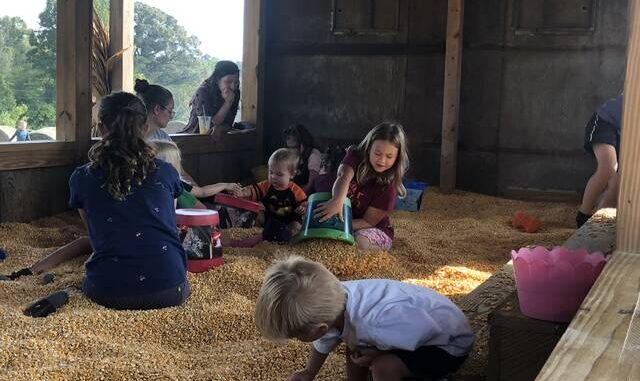 The corn box is a popular activity at the Alpha and Omega Corn Maze in Hamptonville.